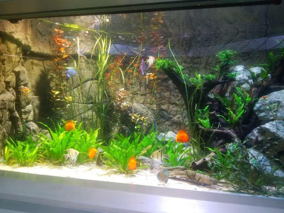 beautiful orange fish