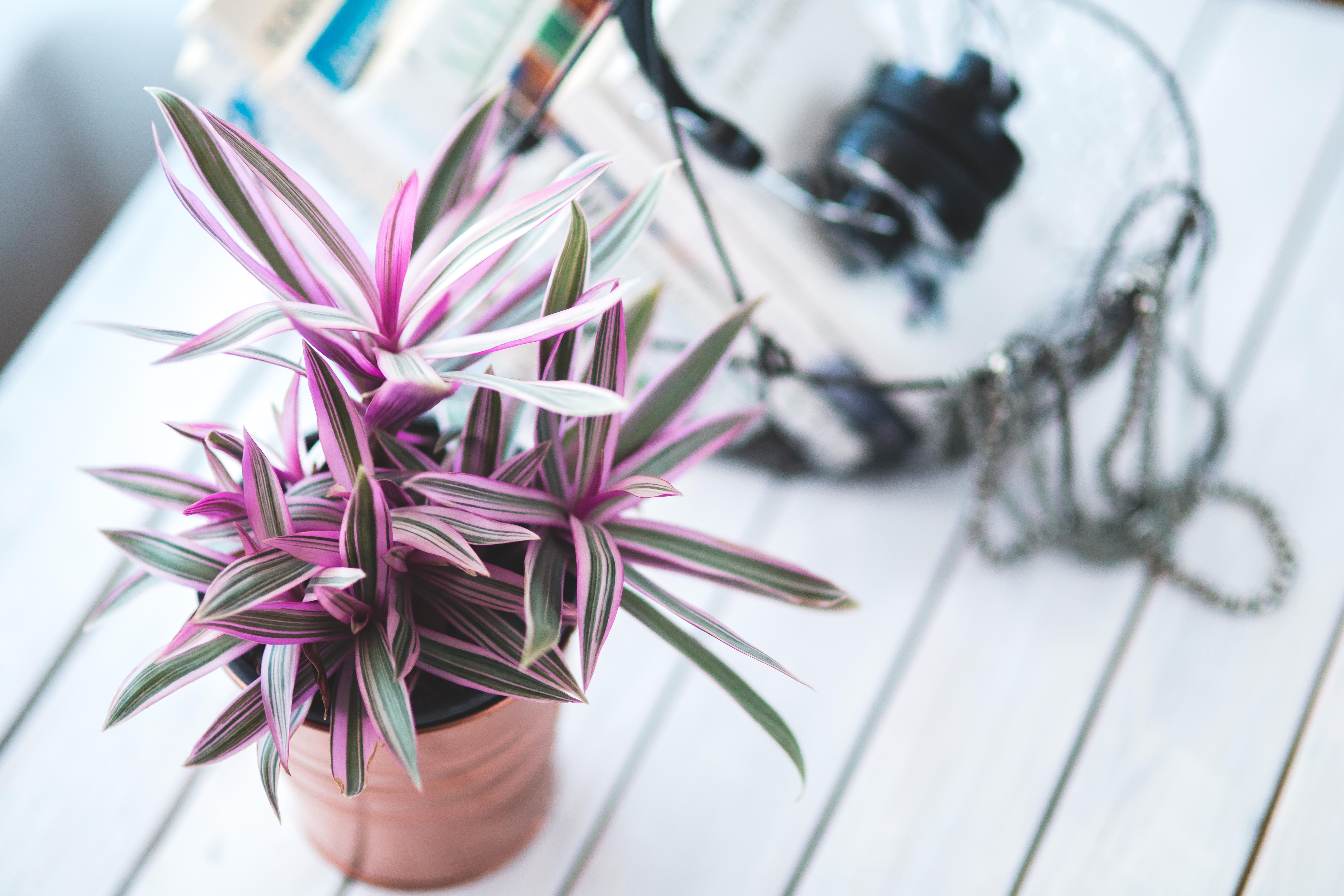 3 Creative Home Hobbies To Turn Into Careers
