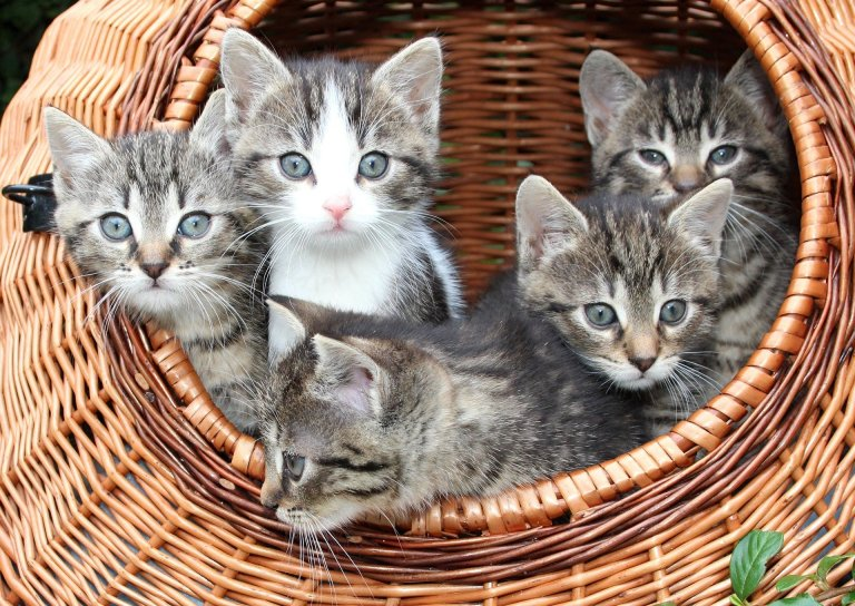 Revealed: Why do cats reject their kittens?