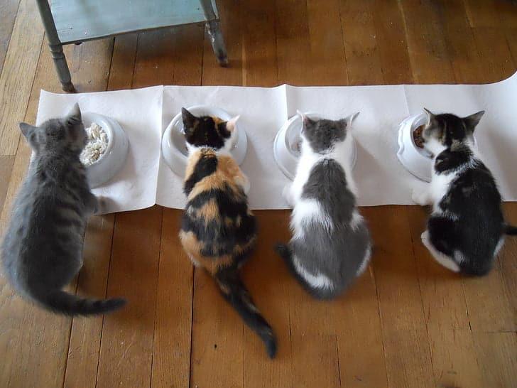 Cats behaviors