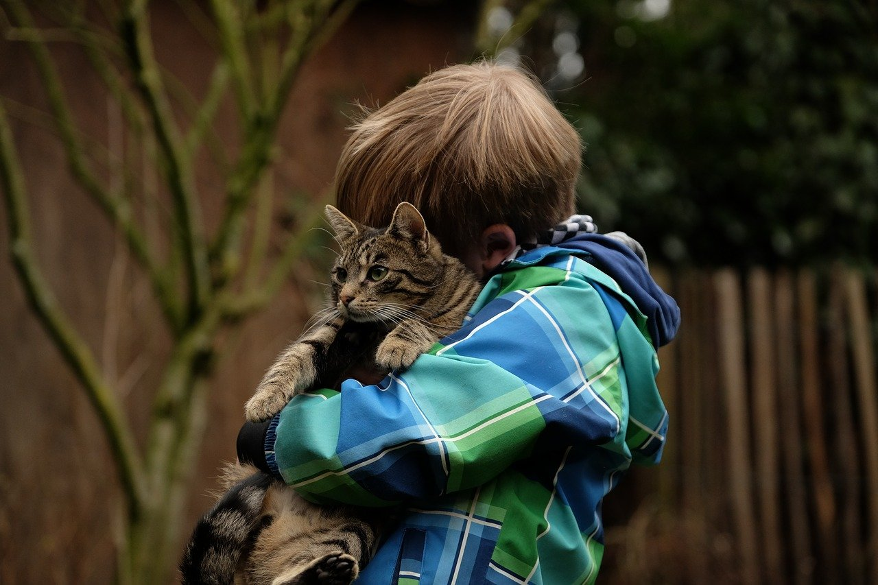 Why some cats snuggle only when alone with the owner.