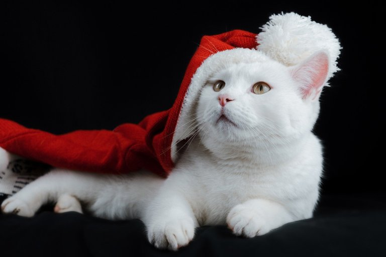 The ultimate guide on reducing your pet's holiday stress