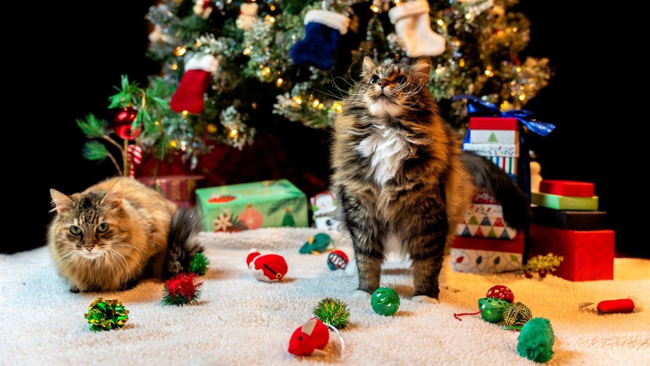 Pet holiday stress