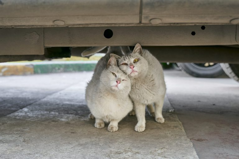 Surprising reasons why stray cats are attracted to your house