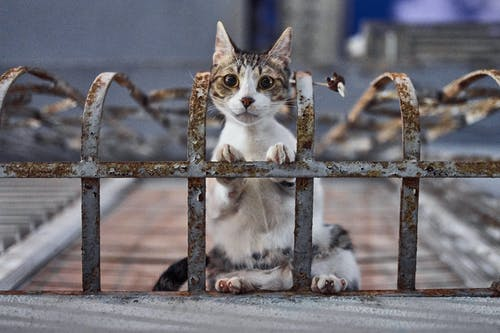 Tips on how to keep strays away from your cat.