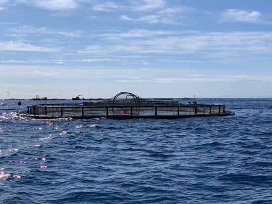 piscifactoría de Aquanaria. Océano