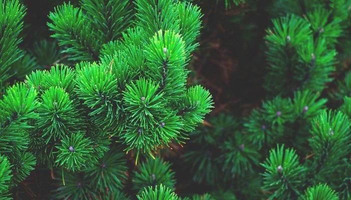 evergreen content marketing ideas