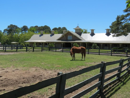 Sea Pines Stables