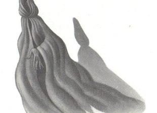 El Dementor