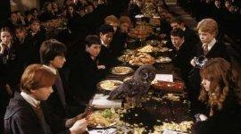 Lechuza de 'Harry Potter' se Retira a una Granja