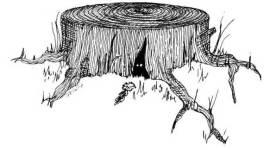 Libros Anexos de Harry Potter 22/24: 'Babbitty Rabbitty y su Cepa Carcajeante'