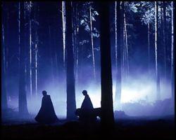 Bosque Prohibido de Hogwarts