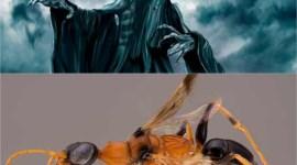 Dementores de 'Harry Potter' dan Nombre a una Nueva Especie de Avispa!