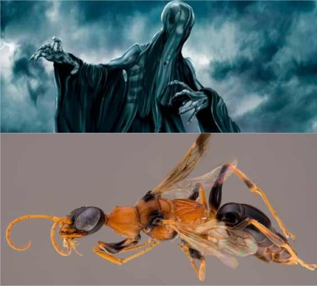Harry Potter BlogHogwarts Dementor Avispa