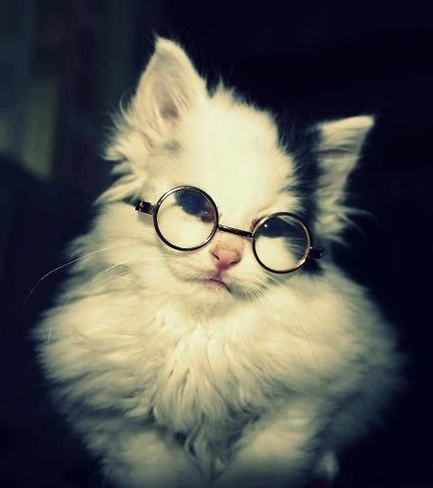 Harry Potter BlogHogwarts Gatos (2)