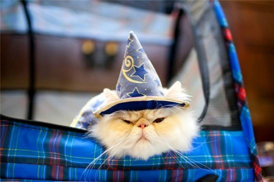 Harry Potter BlogHogwarts Gatos (3)