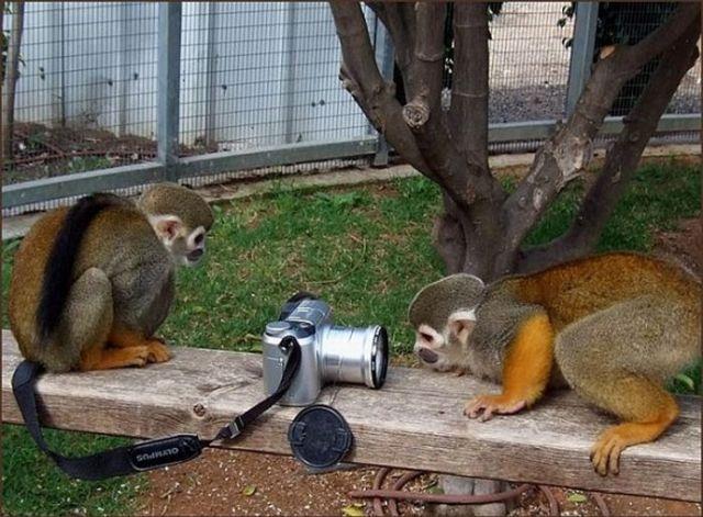 A reação dos animais em frente as câmeras