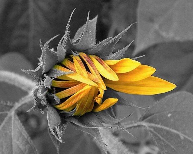 50 belas fotografias coloridas em preto e branco