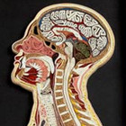 anatomia_humana_papel_japones