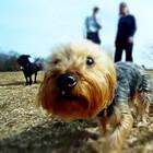 camera_cachorro