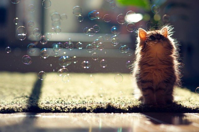 A gatinha mais fofa e charmosa do mundo