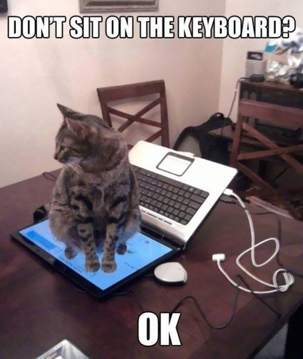 A bizarra lógica dos gatos