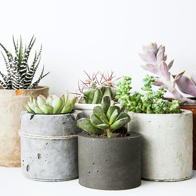 5 Best Low Maintenance Indoor Plants
