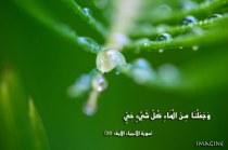 IMG_9876 copy