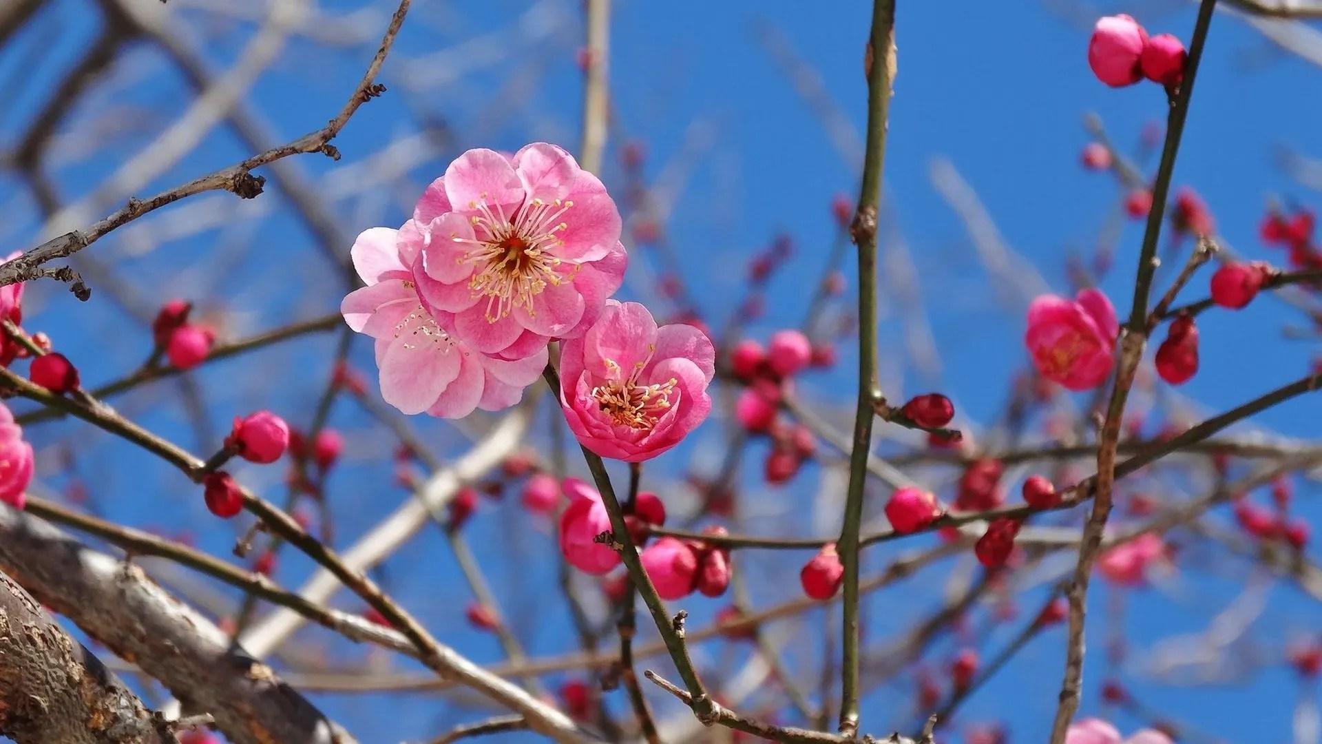 立春 ~冬の華~ - 信の信州からの贈り物