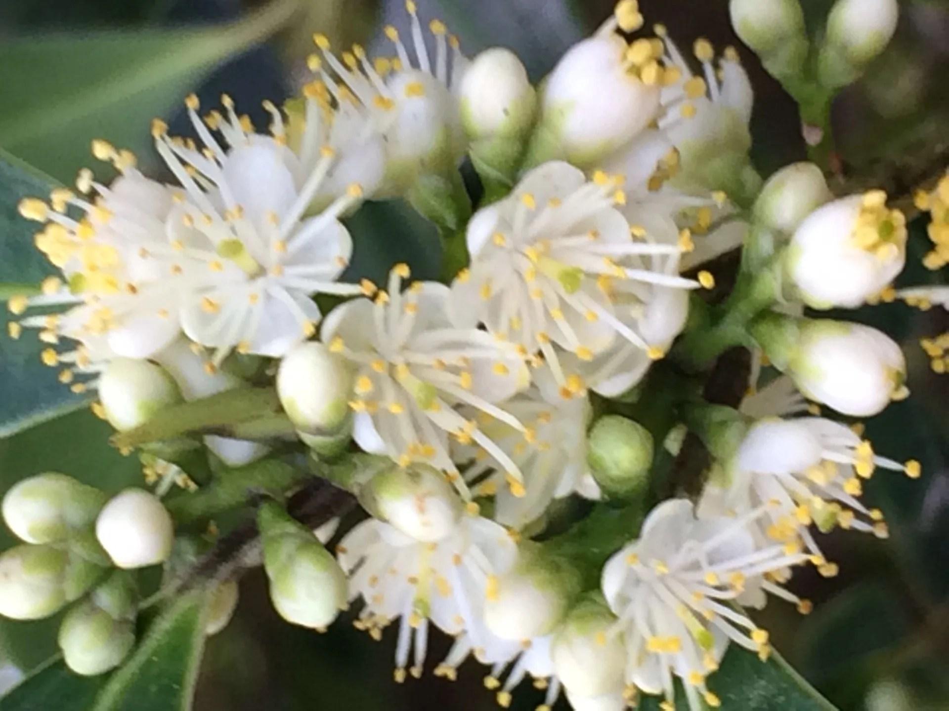 木に咲く白い花 - 寫真と短い文章 2