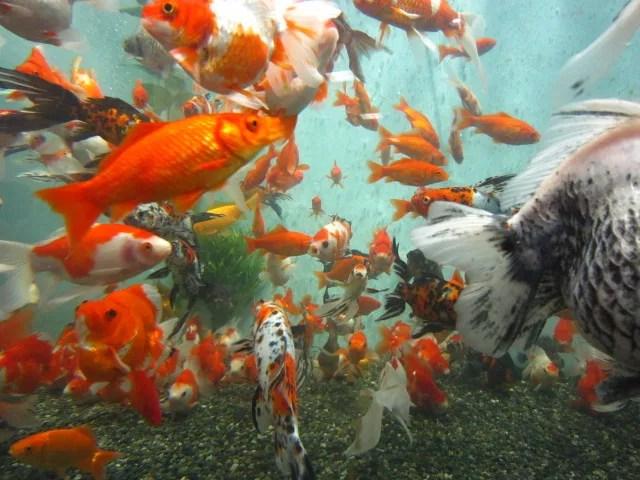 先週の土曜日に名古屋港水族館に行きました。 - さかなが好きな家庭の日常
