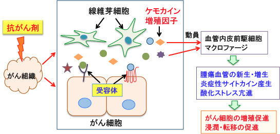 407)ケモカイン受容體CXCR4の阻害をターゲットにしたがん治療 ...