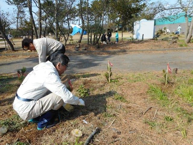 海岸松の植樹事業に參加して - 鈴木すみよしブログ