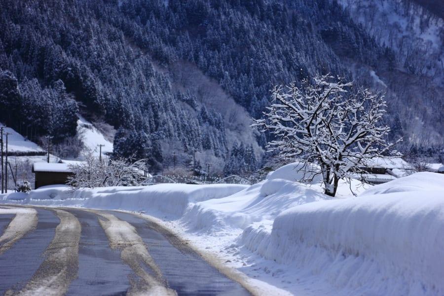 雪の魔法 白山山麓 - 寫真師の「新カメラ日記」