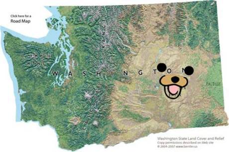 Washington State Pedobear
