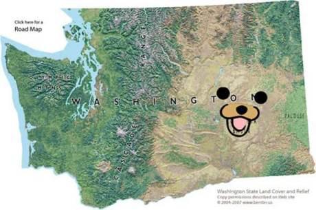 Washington State Pedobear