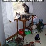 Pets: Why We Don't Own Cats