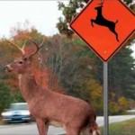 Caller Wants Deer Crossing Signs Moved