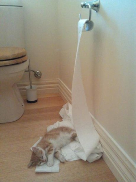Cat lying on a bed of unrolled toilet paper.