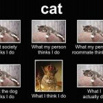 What Do Cats Do?