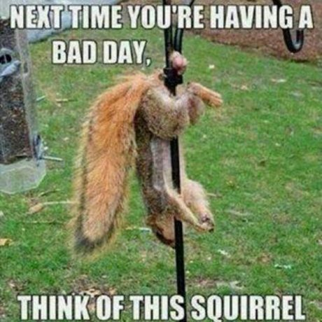 Net Time You're Having a Bad Day, Think of This Squirrel