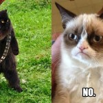 Mixing Themes: Star Wars & LOLcats