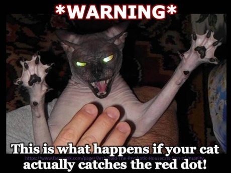 * Warning * This is what happens if your cat actually catches the red dot.
