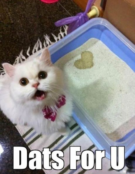 "Cat Pee in the Litter Box Heart: ""DATS FOR U"""