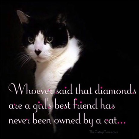 Whoever said that diamonds are a girl's best friend has never been owned by a cat...
