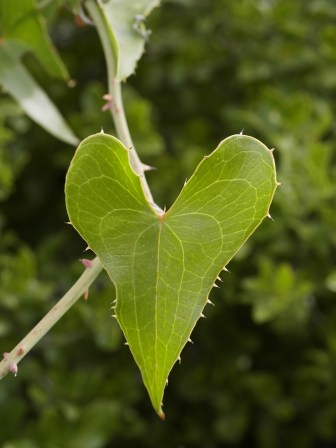 Hearts can be found everywhere in nature. Photo: wikimedia