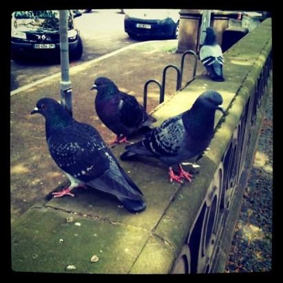 Pigeons place Saint Pierre le Jeune