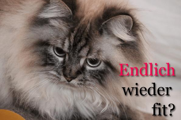 Blogkatzen-kranke-Katze-Simba-wieder-fit