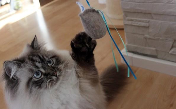 Julinka Spielzeug für die Katze Squid