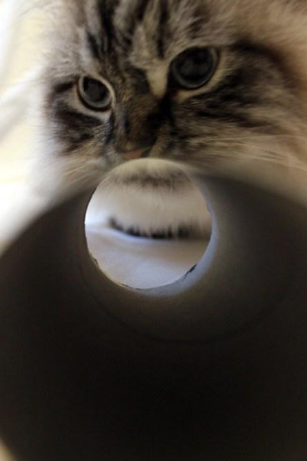 DIY Spielzeug für Katzen aus Klopapierrolle